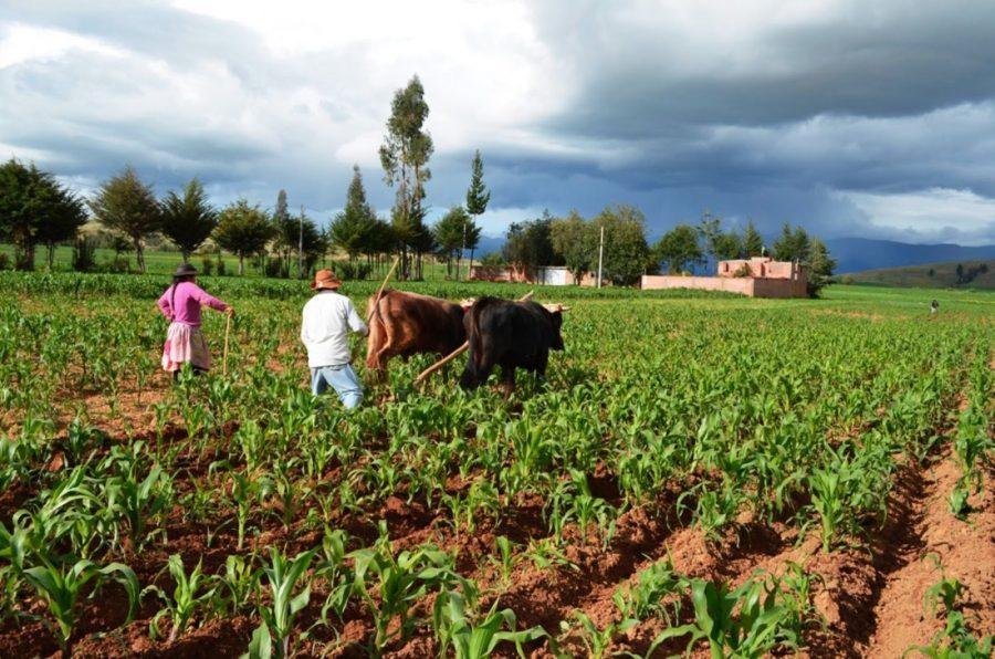 O'Higgins: Apoyo financiero del INDAP para los pequeños campesinos